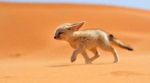 morocco_desert_4